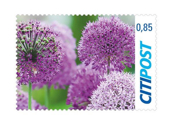 Briefmarken Zierlauch